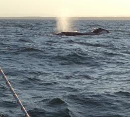 Whales off Bribie