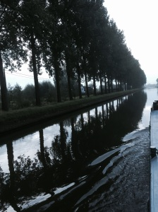 These trees stand proud by the aters of a canal near Bruges