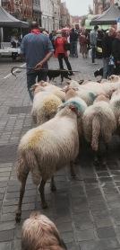 Shepherd in Bruges