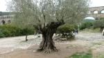 www.monumentaltrees.com